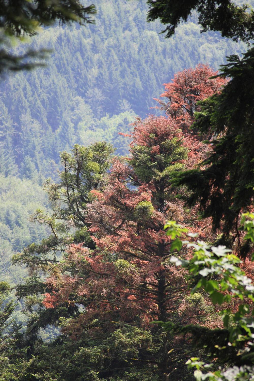 Aktuelle Fördermaßnahmen des Integrierten Waldschutzes zur Bewältigung von Naturkatastrophen im Wald